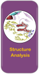 Stucture Analysis